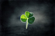 Melanie Lankford Photography - Magical Clover