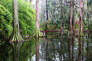 Magical Cypress Swamp Print by Carol Groenen