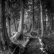 Monochrome Art - Magical Forest 2 by Scott Norris