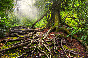 Tree Roots Photo Prints - Magical Light on the Appalachian Trail Print by Debra and Dave Vanderlaan