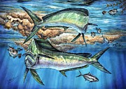 Striped Marlin Framed Prints - Magical Mahi Mahi Sargassum Framed Print by Terry  Fox