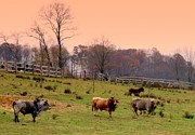 Tennessee Farm Prints - Magical Mornings Print by Karen Wiles