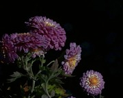 Gardens Digital Art Originals - Magical Mums by Wide Awake  Arts