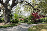 South Carolina Photos - Magical Wonderland by Suzanne Gaff