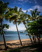 Perry Webster - Magnetic Island Palms