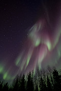 Borealis Photos - Magnificence by Priska Wettstein