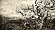 Spooky Digital Art - Magnificent Shoe Tree near San Felipe Road by Ron Regalado