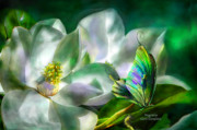 Giclee Mixed Media Framed Prints - Magnolia Framed Print by Carol Cavalaris