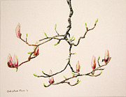 Picture Painting Originals - Magnolia Chandelier by Kristine Plum