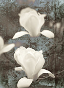 Textured Floral Mixed Media Framed Prints - Magnolia Framed Print by Frank Tschakert