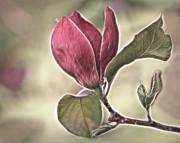 Magnolia Glow Print by Susan Candelario