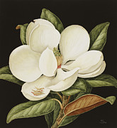 White Roses Paintings - Magnolia Grandiflora by Jenny Barron