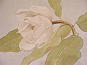 Treatment Painting Prints - Magnolia Joy Print by Nancy Kane Chapman