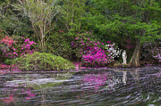 Azaleas Photos - Magnolia Plantation by Joseph Rossbach