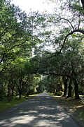 Shady Street Posters - MAgnolia Plantation Way Poster by Christiane Schulze