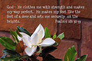 Psalms Photo Posters - Magnolia Psalms 18v32-33 Poster by Linda Phelps