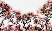 Pentecost Photos - Magnolia tree by Jens Tischer