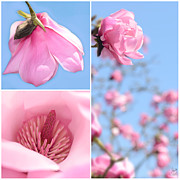 Wall Art Garden Prints - Magnolia Triptych Print by Lisa Knechtel