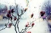 Magnolias Print by Elaine Manley