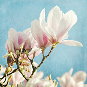 Magnolias IIi Print by Iris Lehnhardt