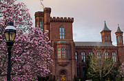 Smithsonian Museum Posters - Magnolias Near The Castle Poster by Andrew Pacheco