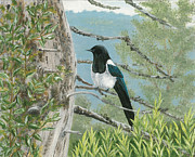 Magpie Paintings - Magpie in Alaska by Lucinda V VanVleck