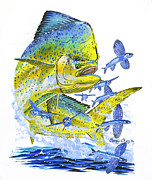 Marlin Azul Framed Prints - Mahi Mahi Framed Print by Carey Chen
