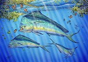 Gamefish Framed Prints - Mahi Mahi In Sargassum Framed Print by Terry Fox