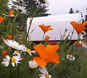 Mail Box Prints - Mail My Poppies Print by Pamela Roberts-Aue