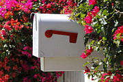 Delivery Flowers Prints - Mailbox Print by Rudy Umans