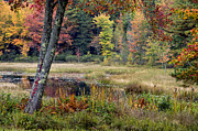 Mt Desert Island Prints - Maine Autumn Print by John Greim