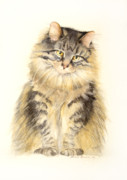 Maine Painting Posters - Maine Coon Cat Poster by Bonnie Rinier