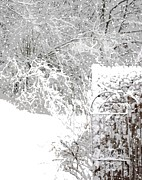 Patricia Sundik - Maine Winter Snowy Garden
