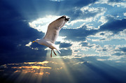 Holy Art - Majestic bird against sunset sky by Michal Bednarek