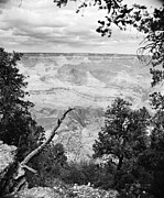 Scenic Photographs Posters - Majestic Grand Canyon from the Rim in Black and White Poster by M K  Miller