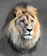 Lion Poster Prints - Majestic in leather Print by Helen Akerstrom Photography