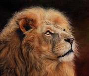 Oil Cat Paintings - Majestic Lion by David Stribbling
