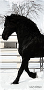 Friesian Posters - Majestic Stallion Poster by Royal Grove Fine Art