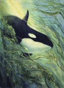 Killer Whale Paintings - Majestic Visitor by Connie Ely McClure