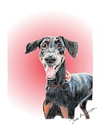 Animal Shelter Drawings - Maka - a former shelter sweetie by Dave Anderson
