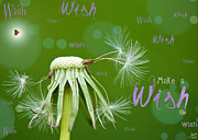 Green Greeting Cards Prints - Make a Wish Card Print by Lisa Knechtel