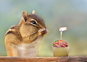 Cute Chipmunk Prints - Make a Wish Print by Lori Deiter