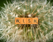 Weed Metal Prints - Make A Wish Metal Print by  Onyonet  Photo Studios