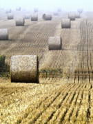 Horizon Lines Art - Make hay while the sun shines  by Heiko Koehrer-Wagner