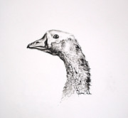 Geese Drawings Prints - Make My Day Print by James Skiles