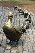 Christiane Schulze Acrylic Prints - Make Way for Ducklings Acrylic Print by Christiane Schulze