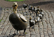 Pleasure Photo Prints - Make Way for Ducklings Print by Juergen Roth