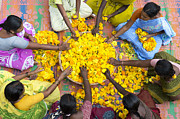 India Photos - Making Flower Garlands by Tim Gainey