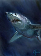 Sharks Art - Mako by Tom Dauria