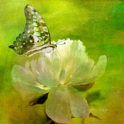 Butterfly On Flower Prints - Malachite on Peony Print by Lois Bryan